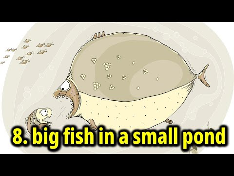 English Idioms 8: Big Fish In A Small Pond