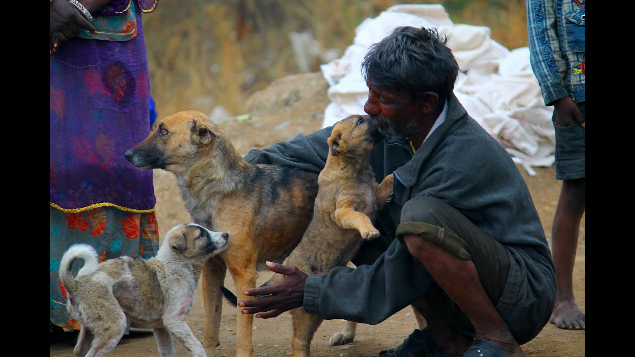 Indian Street Dog Food