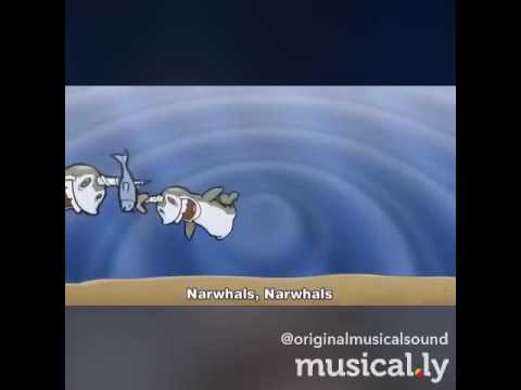 Narwhals song