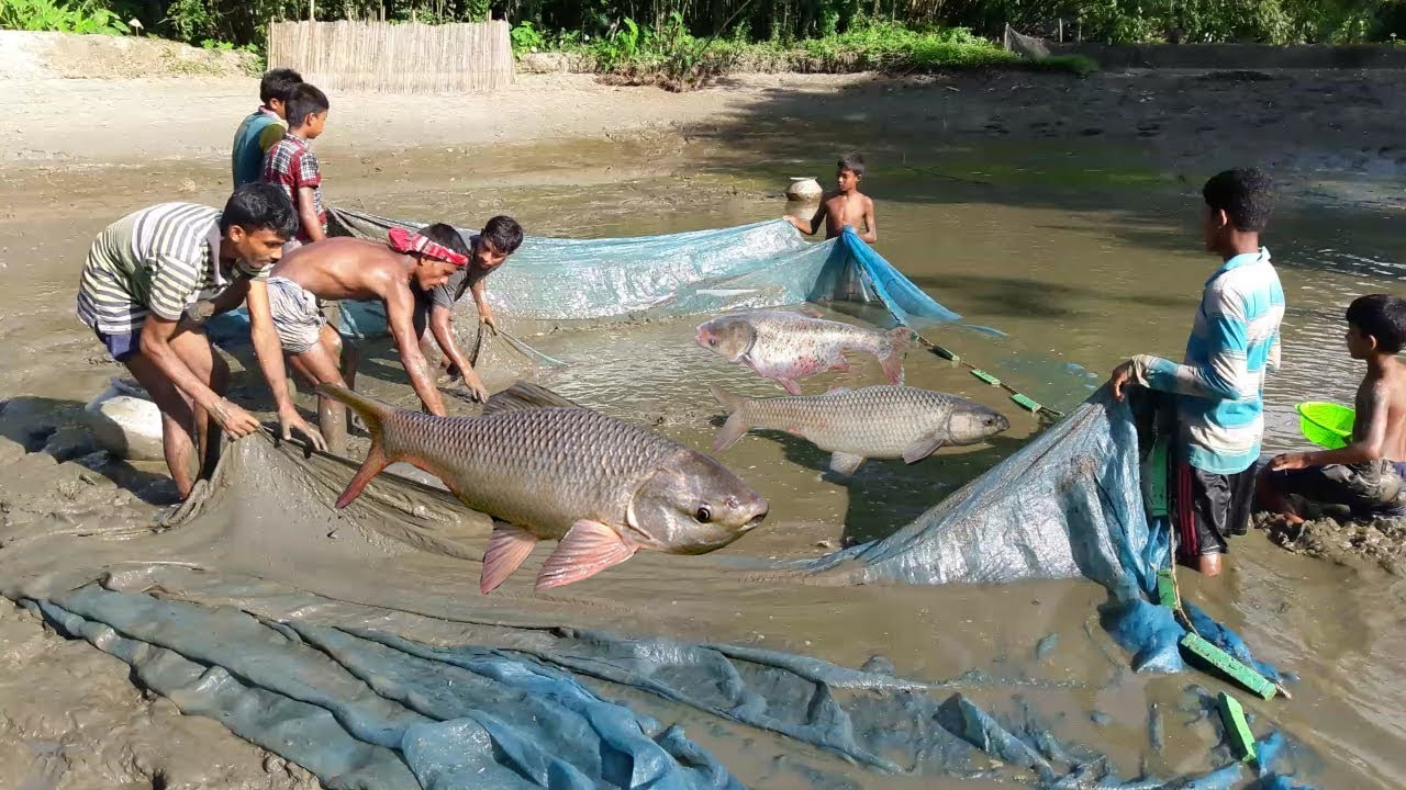Fish catching in mud water pond using the fishing net for Fish catching net