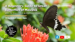 A Beginner's Guide to Urban Butterflies of Malaysia