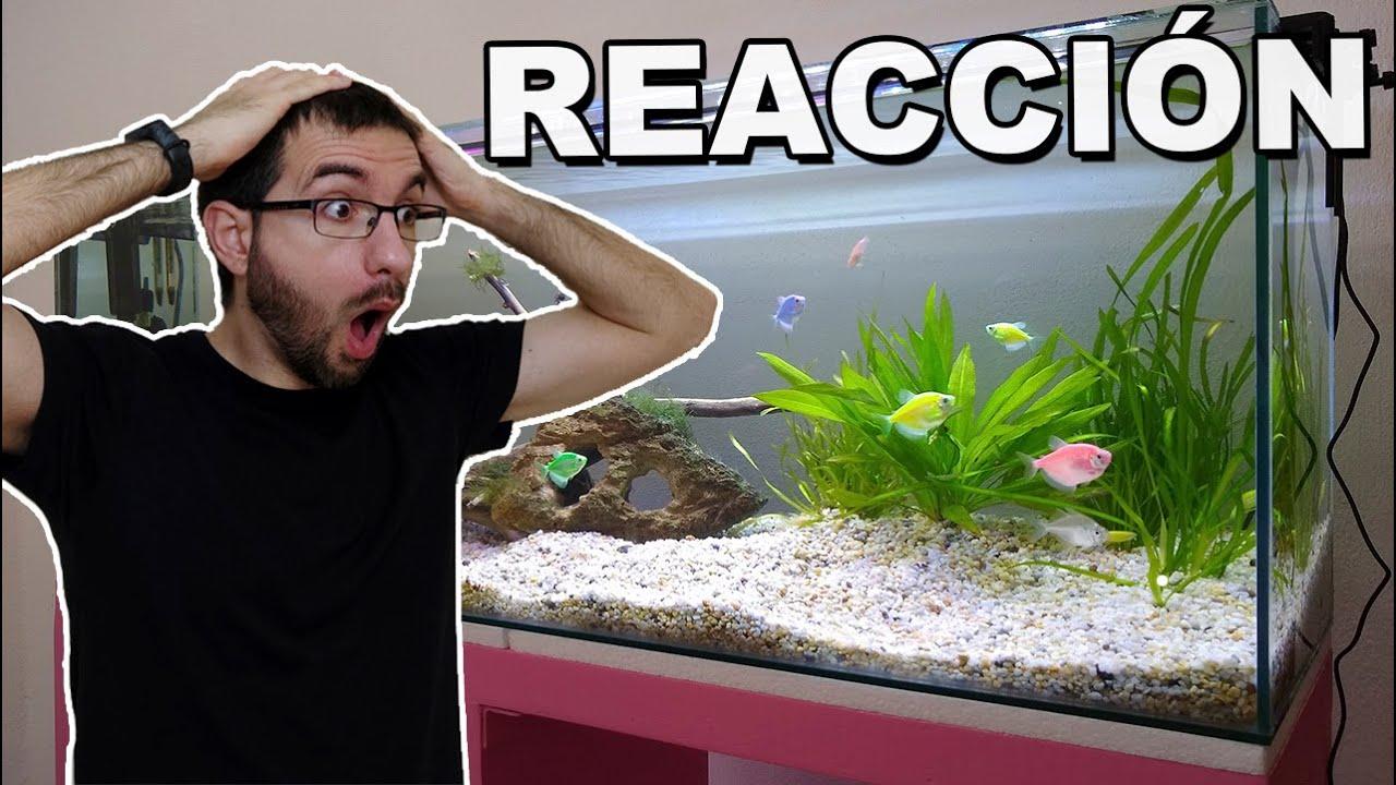 Reaccionando a acuarios de suscriptores | Acuarios Rtules