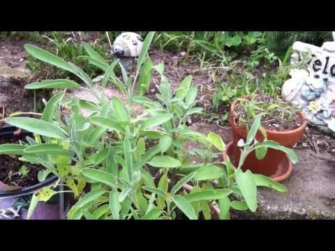# 13  My Herbal Garden.