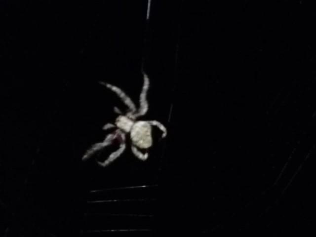 Spider at work 3