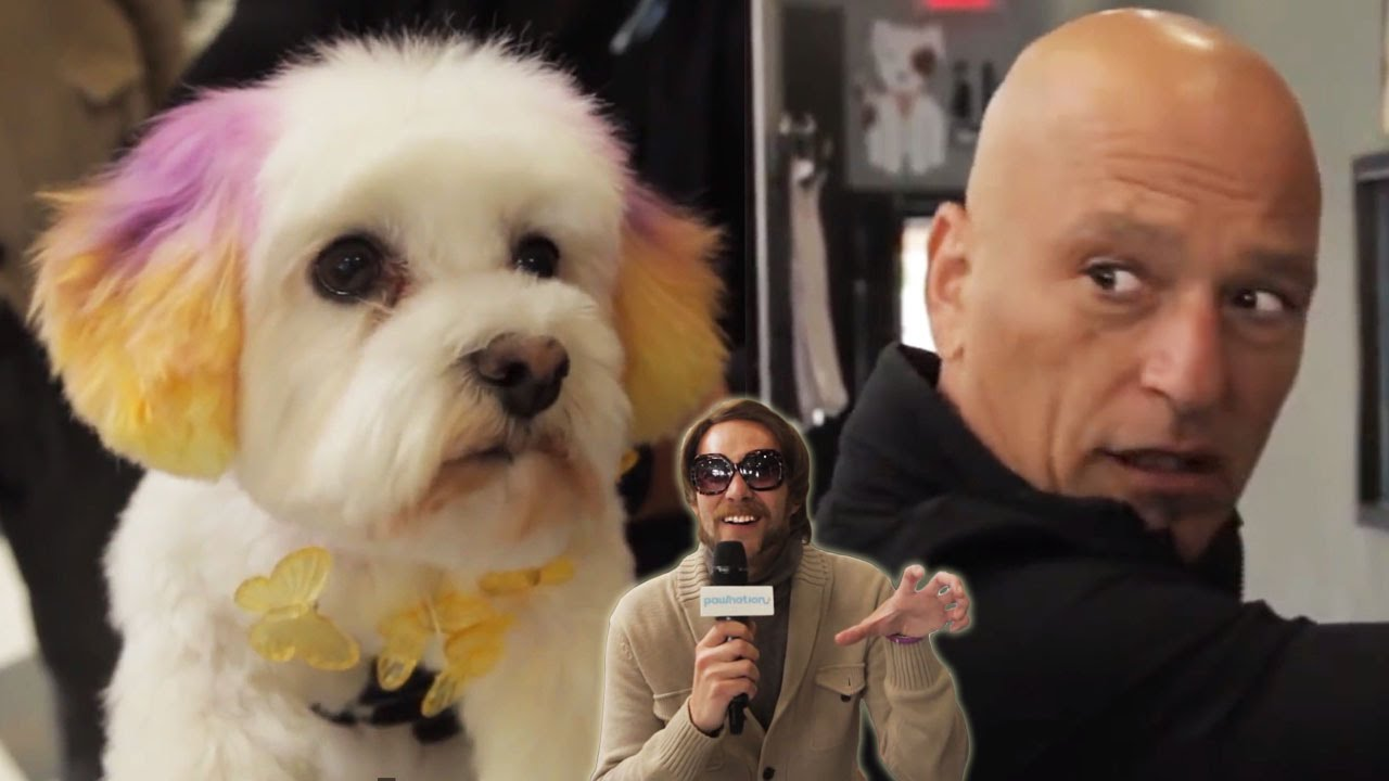 Honey Badger & Howie Mandel Go Extreme Dog Grooming