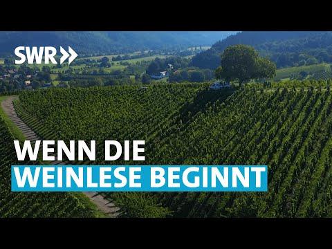 Leidenschaft Wein  | SWR Treffpunkt