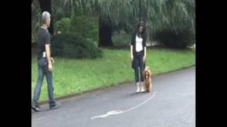 http://www.tmaweb.biz/16289/ 面白い犬のしつけ方?リードを変えるだけ...