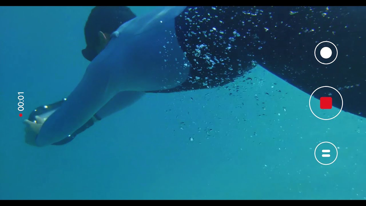 Redmi Note 9   Freediving z Williamem Trubridge