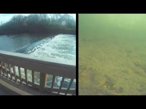 Underwater Episode 53: Hammel Woods F.P. (site31)