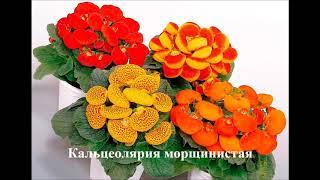 видео Какие цветы сажают на рассаду дома в январе