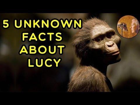 Che E Lucy L Australopiteco Cinque Fatti Sconosciuti Circa La Piu