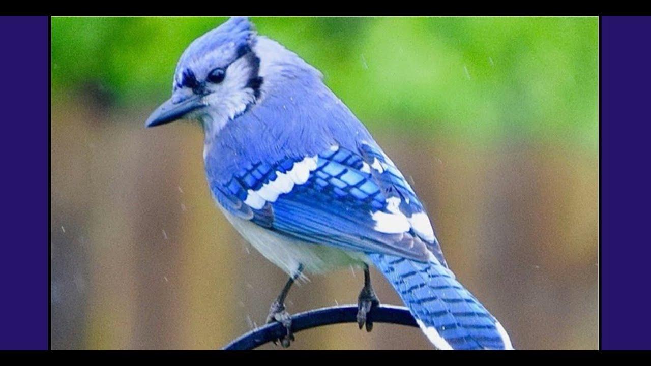 VIDEO:Bird watching is a safe-distance hobby