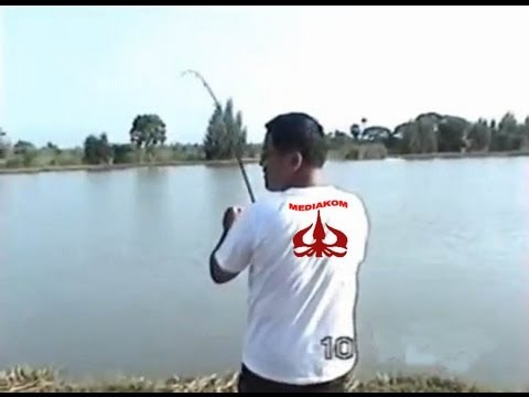 Mancing Refreshing di Kamal Muara Jakarta ( Fishing Indonesia )