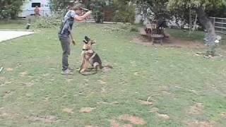 """Schutzhund Dog Training """"fuss""""  05/01/2009 Siegfried"""
