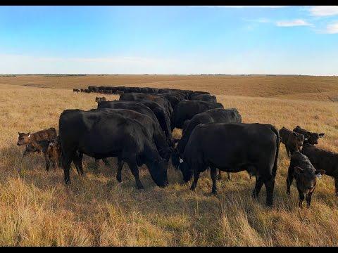 Reducing Livestock Methane Emissions