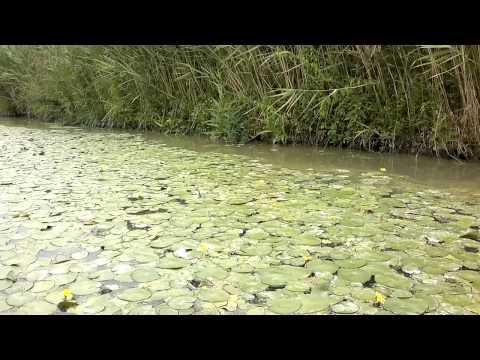 River Monsters in Ferrara - Kayak Index K1 Challenger on board camera