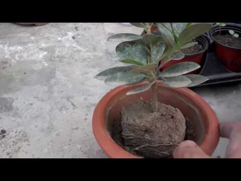 Starting A Bonsai Part-1 (Urdu/Hindi)