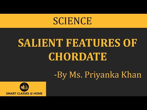 Chordate salient features, BSc, MSc Lecture by Ms. Priyanka khan.