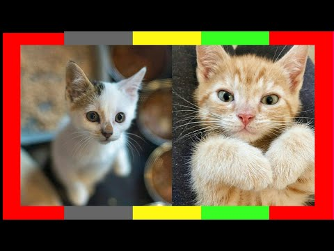 baby cute and funny cats complications video 2020 l cute baby cats