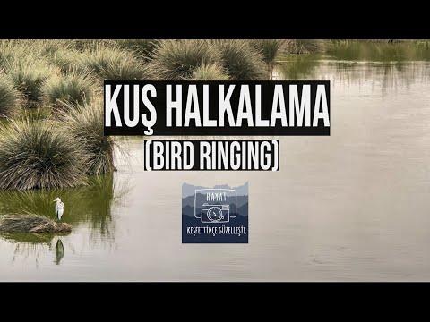 Kuş Halkalama / Bird Ringing
