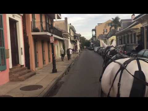 Royal Carriages Mule-Drawn Carriage Tours Of New Orleans