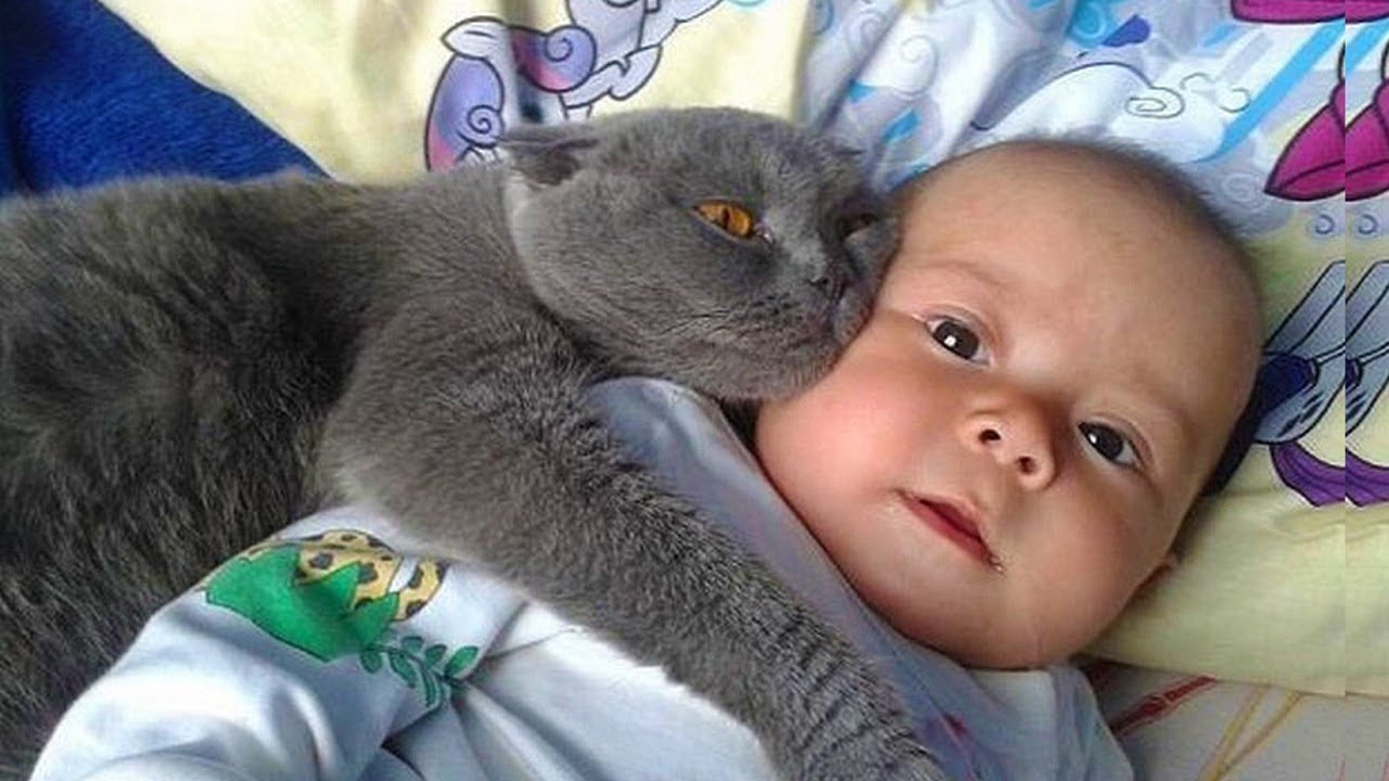 Most Crazy Cats Annoying Babies, If You Laugh You Lose