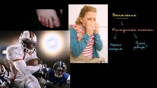 видео Воспаление.Что такое воспаление?