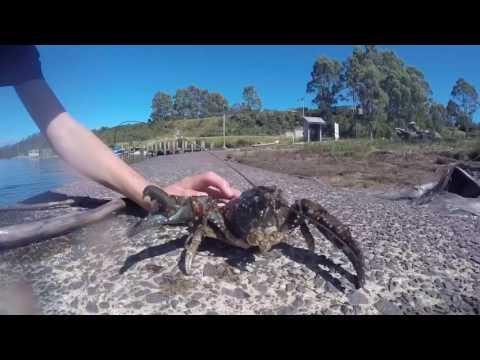 Lake Pedder Freshwater Crayfish Tasmania