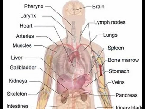 Body Parts You Don\'t Need Medical Minute with Family Physician Dr ...