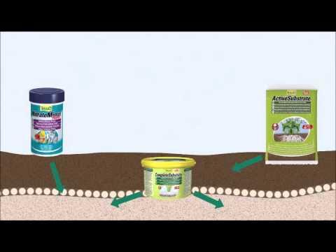 Запуск аквариума с живыми растениями