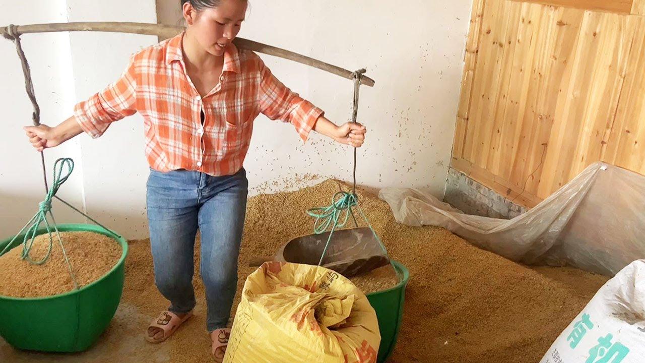 小潘今天去打米,特意給家裏的豬准備了一大包豬食,真大方【農村小潘】