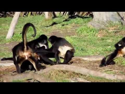 Exploring New Zealand #7: Orana Wildlife Park