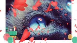 Мой клип из фото милых кошек