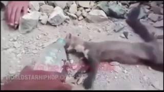 Extremely Dehydrated Mongoose Gets Saved While At The Brink Of Death!