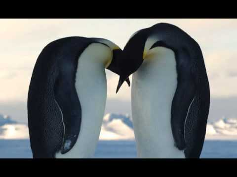 Antarctic Love Song, music by Kirsten Strom