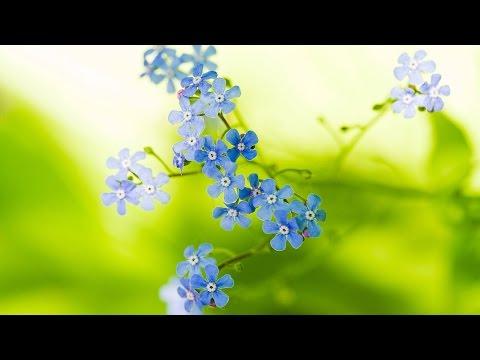 """Детская песня """"Незабудки"""" - день матери - 8 марта - поздравление маме"""