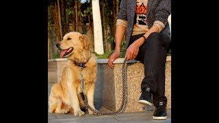 170121020 Genuine Leather Dog Leash