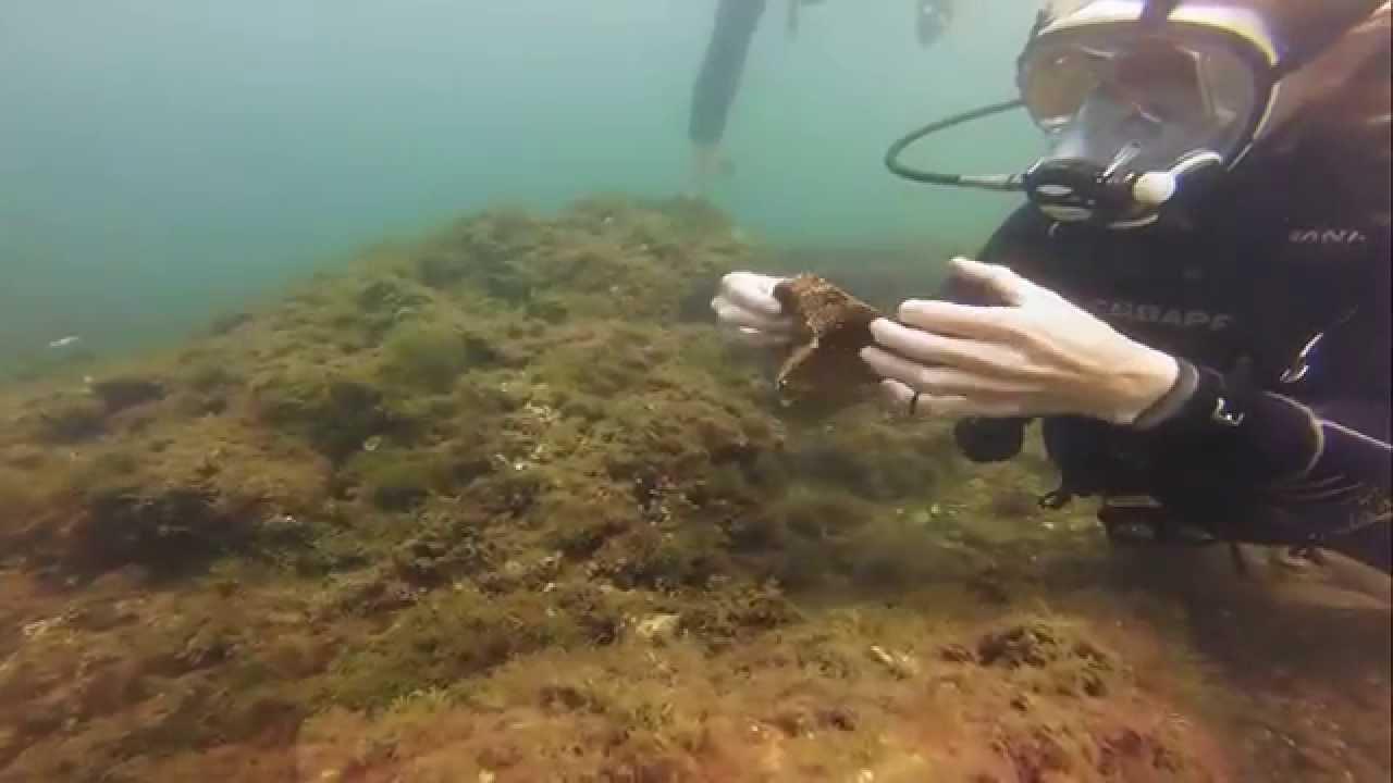Faire de la plongée à naples