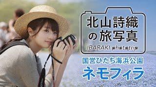 北山詩織の旅写真 〜IBARAKI phototrip〜 国営ひたち海浜公園 ネモフィラ 【江夏詩織】