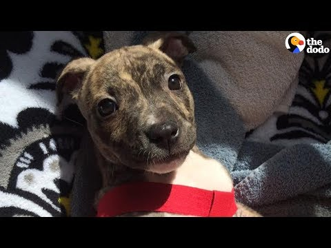 Abandoned Puppy Beats All the Odds to Survive | The Dodo