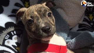 Abandoned Puppy Beats All the Odds to Survive | The Dodo thumbnail