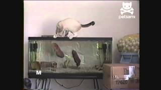 Чуть кота не съели. / A little cat did not eat.
