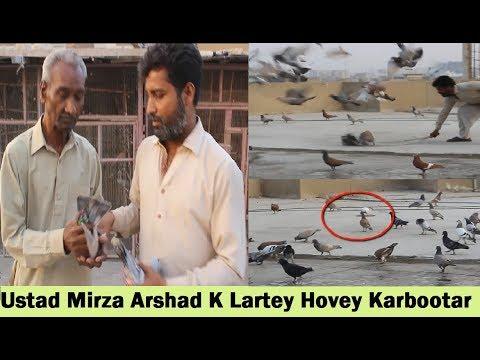 Ustad Mirza Arshad K Lartey Hovey Gola Kabootar in Sharifabad Karachi
