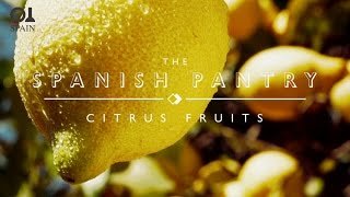 The Spanish Pantry: Citrus Fruit