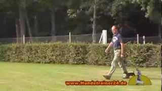 Prager Rattler Caspar vom Lausitzblick ausgebildet bei Hundetrainer 24