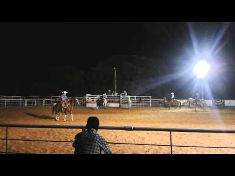 Rodeo cu cai / Rodeo-horses