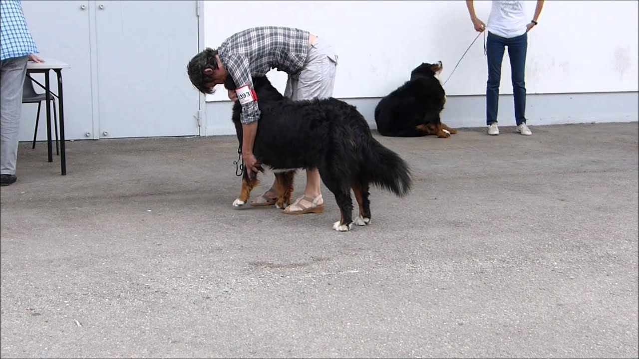centrale canine montpellier