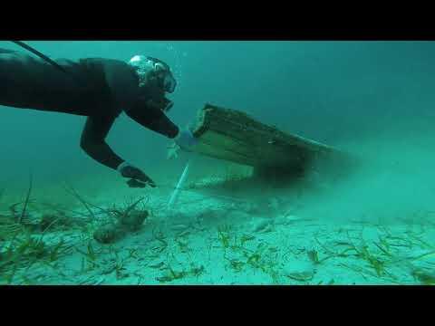 Lobster Season Bahamas 2019