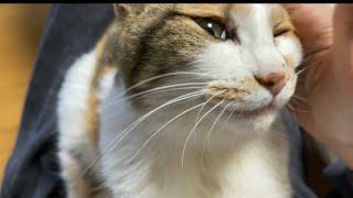 猫のミー子。おかみには赤ちゃんモード。