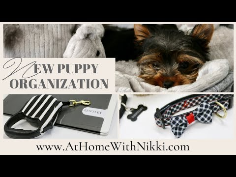PET ORGANIZATION | OUR NEW PUPPY